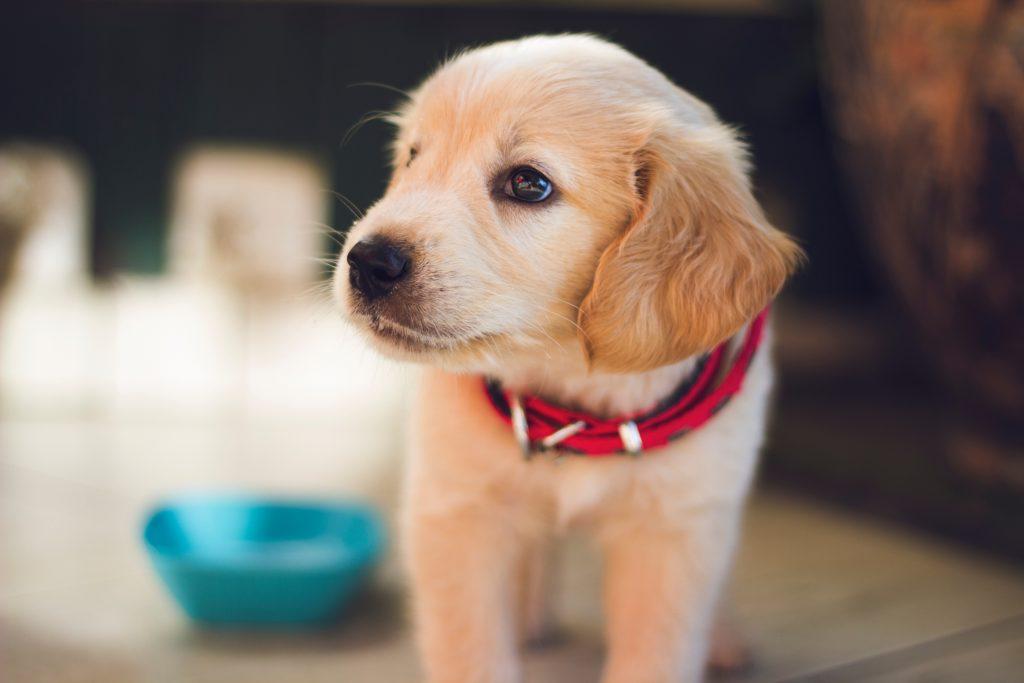 Djurdrömmar.se – Produkttester och recensioner om djur